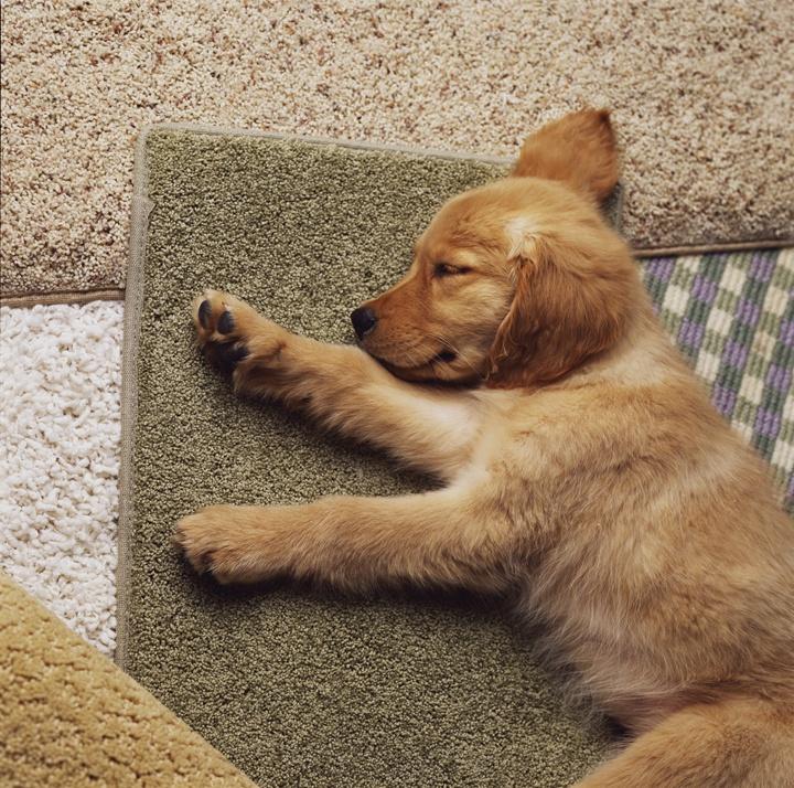 Dog Threw Up On Rug: 15 Best Karastan Carpet Images On Pinterest