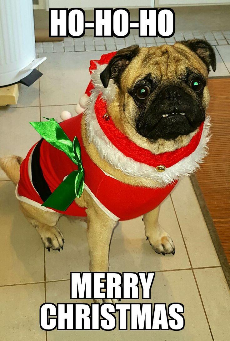 Christmas Bennie 5