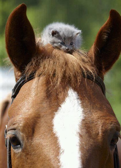 Horse and Kitty