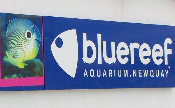 Newquay Aquarium in Newquay, Cornwall