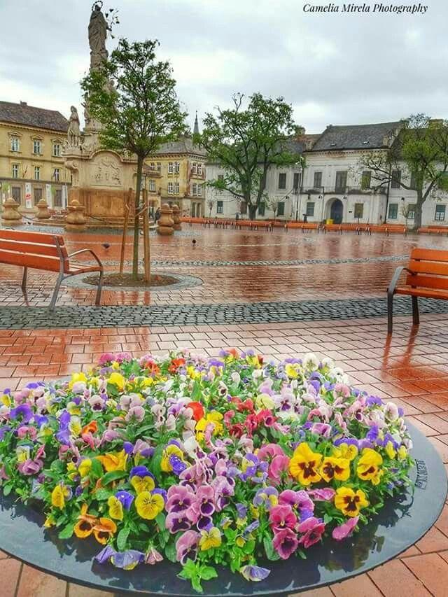 Timisoara - stropi de ploaie la Piata Libertatii.   foto Camelia Mirela Photography