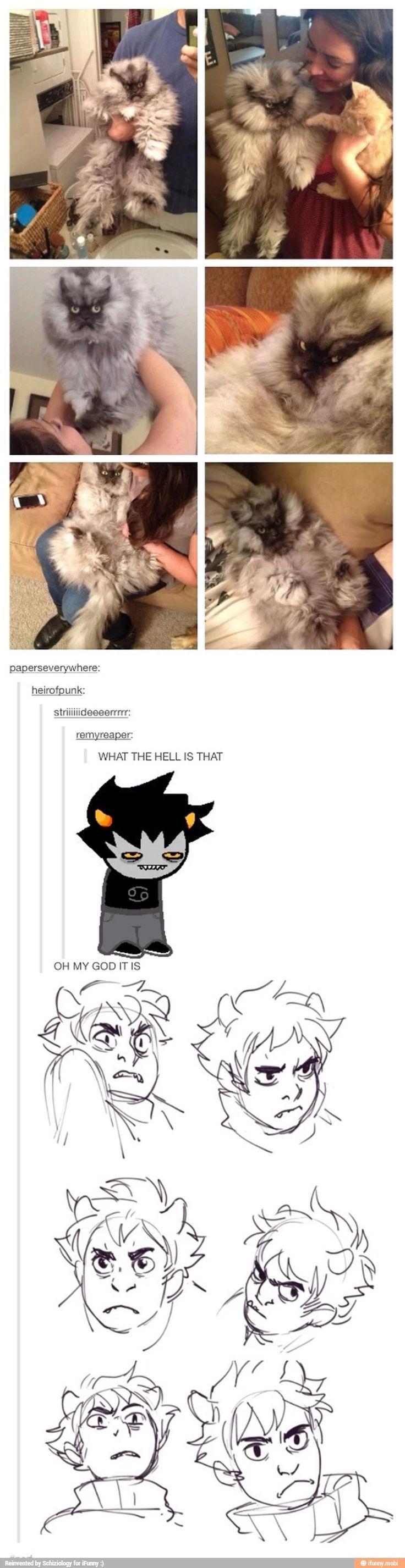 PRECIOUS ANGRY KITTIES