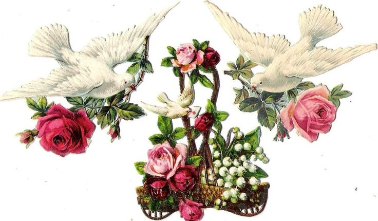 Oblaten Glanzbild scrap die cut chromo Taube dove pigeon Ast branch Rose Korb