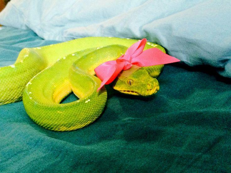 Картинка змея с цветком на голове тебя