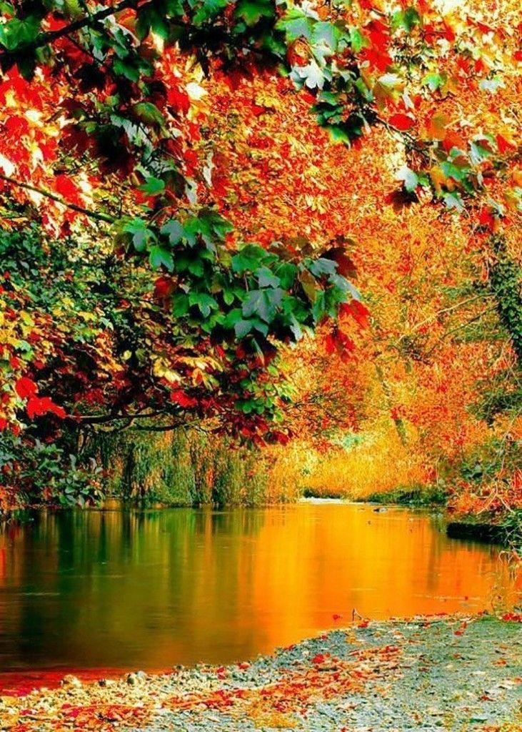 картинки на телефон красивые природа осень порция прикольных картинок