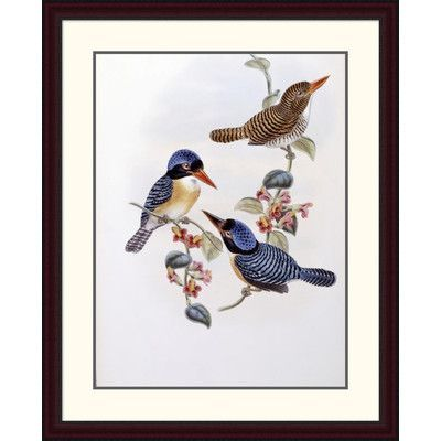 Global Gallery 'Black Faced Kingfisher' by John Gould Framed Painting Print Size: