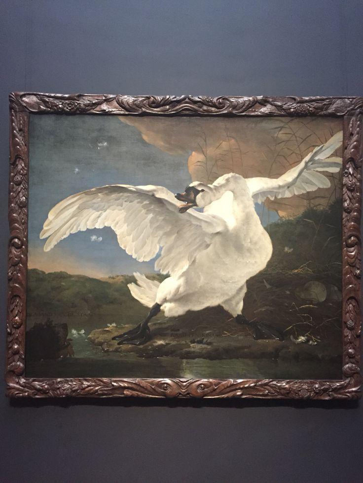 Jan Asselijn, ca. 1650  De bedreigde zwaan olieverf op doek.   Energiek verdedigt een zwaan haar nest tegen een hond. Het gevecht werd in latere eeuwen politiek geduid: de witte zwaan werd opgevat als de in 1672 vermoorde staatsman Johan de Witt, die het land verdedigt tegen zijn vijanden.