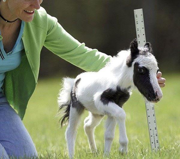 Tiny Horses ♥♥ Minik atlar ♥♥