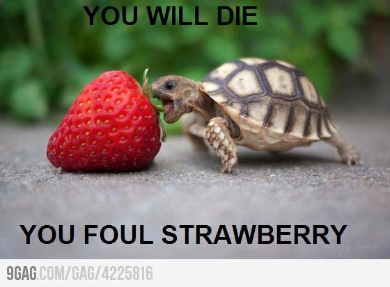 DAWWWWWEThinking Big, Dreams Big, Strawberries, Funny, Baby Animal, Things, Nom Nom, Challenges Accepted, Baby Turtles