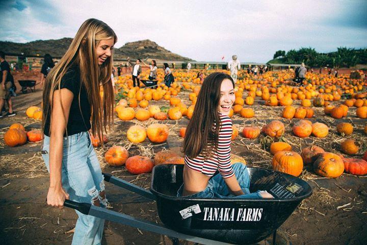 pumpkin patch, wheel barrow- whole shot