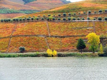 É considerada a estrada mais romântica de Portugal. Sabe de qual se trata?