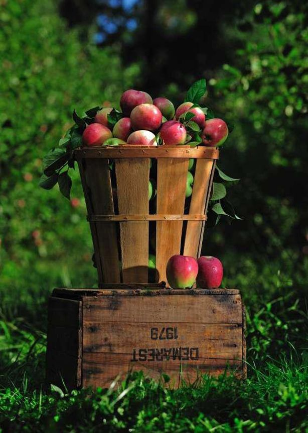 A little history behind foods for Rosh Hashanah.