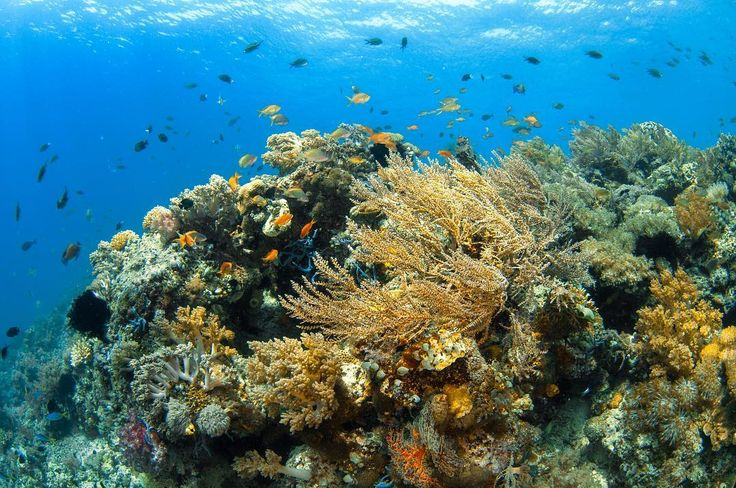 After a long trip Alor-Komodo-RajaAmpat I am having a 5 days of diving #Maumere .  After Tsunami hit this area about 25 years ago we can see the underwater world recovered.  #PesonaMaumereManise