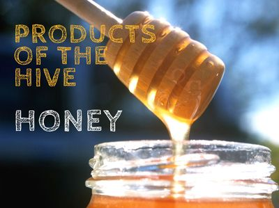 Honey is one of the oldest known sweeteners.  It has been an essential part of our diet since earliest times and there is increased interest in its culinary and health properties.  But what is honey?  How is it made?  How is it extracted from the hive? What is it good for?