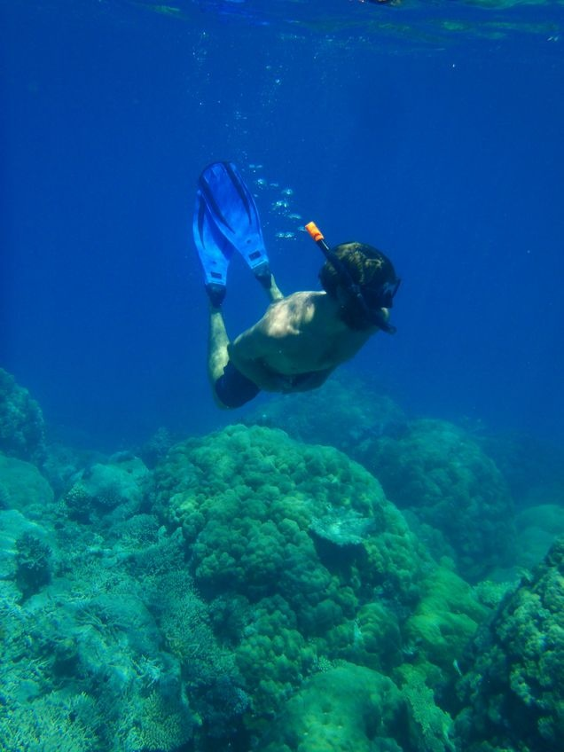 Pit stop: Time for a quick snorkel on the Great Barrier Reef, Port Douglas #triplejroadtrip