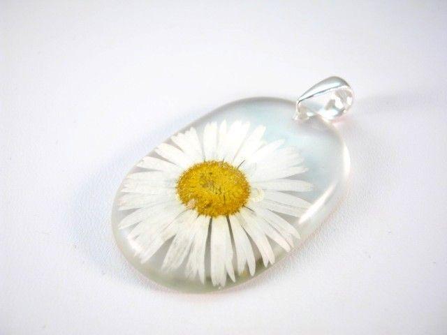 Flower of Daisy preserved in resin. http://en.dawanda.com/product/48689430-Anhaenger---Gaensebluemchen---925-Silber