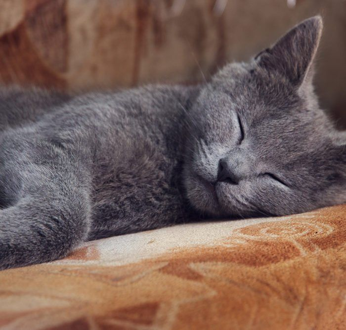 Why Do Cats Sleep In Sinks In 2020 Cat Sleeping Cats Sleeping Dogs