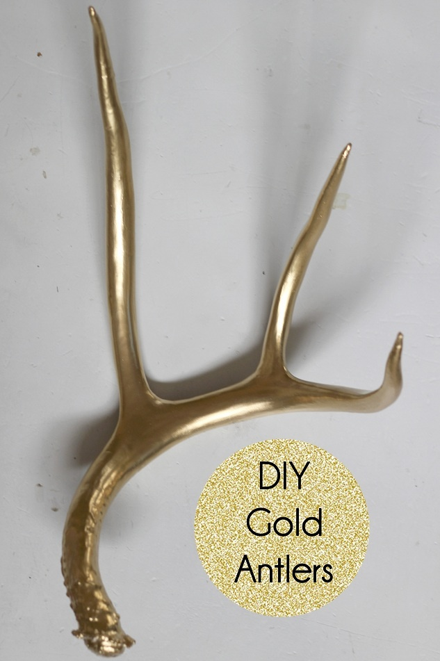 1000 Images About Antlers On Pinterest