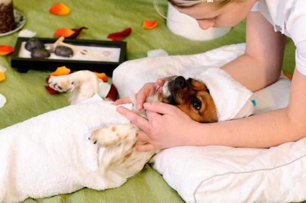 Como fazer uma massagem no seu cão ou gato Saiba como fazer mais coisas em http://www.comofazer.org/animais/como-fazer-uma-massagem-no-seu-cao-ou-gato/