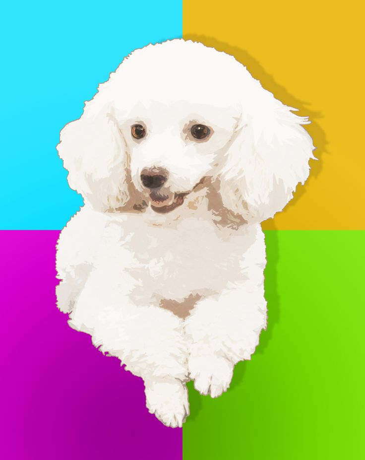Princess Poodle with Color Block Background