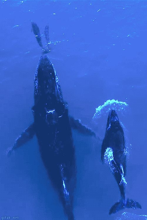 gifak-net: video: Mother Whale And Mother Dolphin With Baby's