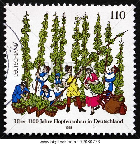 Germany, 1998. German Cultivation of Hops