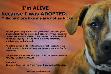 adopt.......Cat Beds, Dogs Beds, Animal Rescue, Animal Shelters, Pets Beds, Adoption A Dogs, Animal Advocacy, Dogs Breeds, Pets Stores
