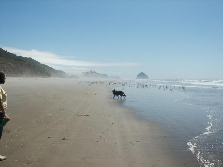 Beginning of a beach hike with my four legged friend.