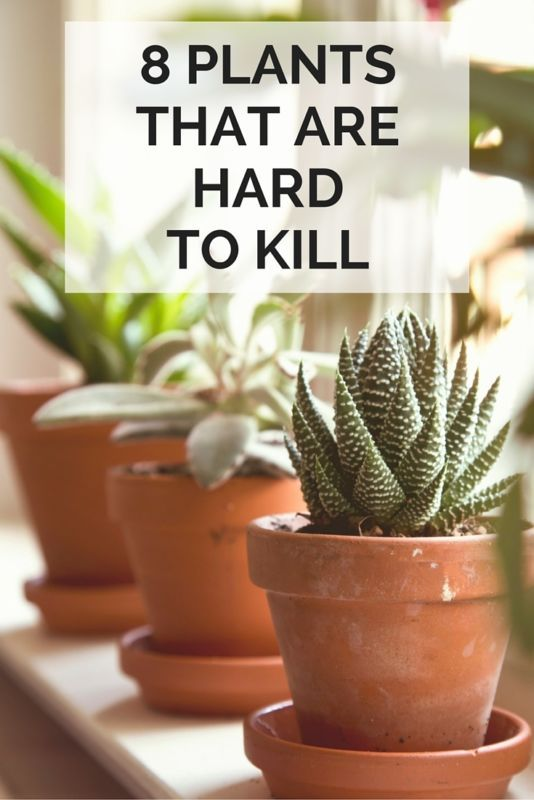 8 house plants that are hard to kill