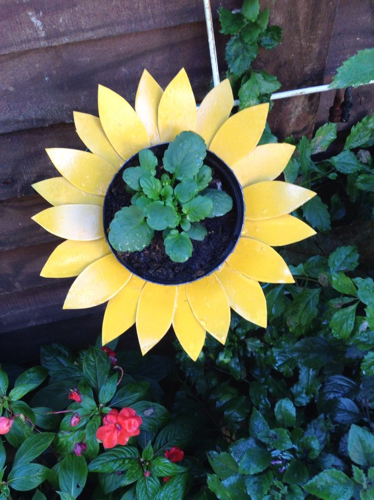 Sunflower plant holder