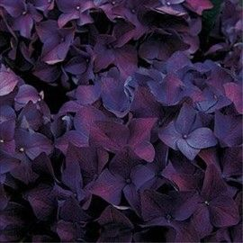 25 best ideas about purple hydrangeas on pinterest. Black Bedroom Furniture Sets. Home Design Ideas