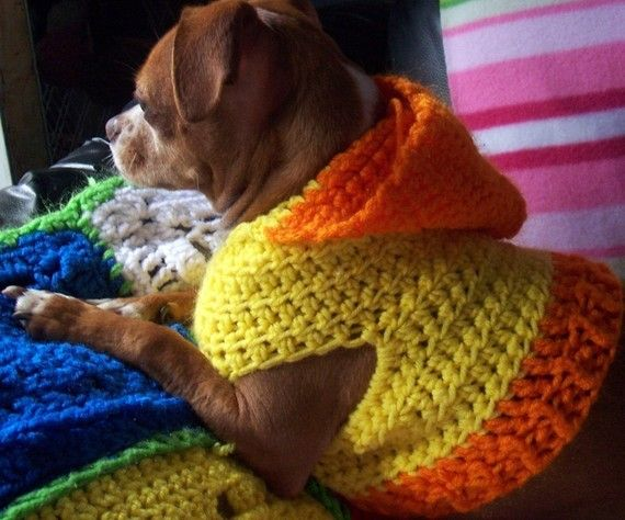 Free Crochet Pattern Hooded Dog Sweater ~ manet for .