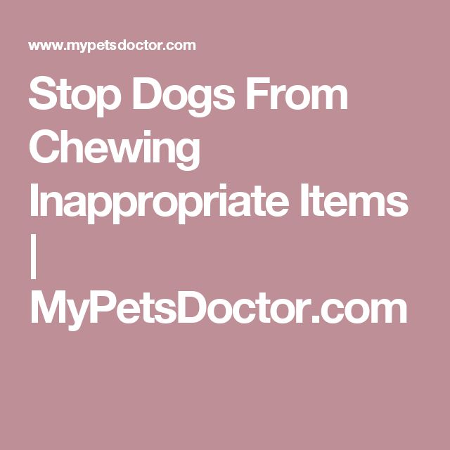 Stop Dogs From Chewing Inappropriate Items  |  MyPetsDoctor.com