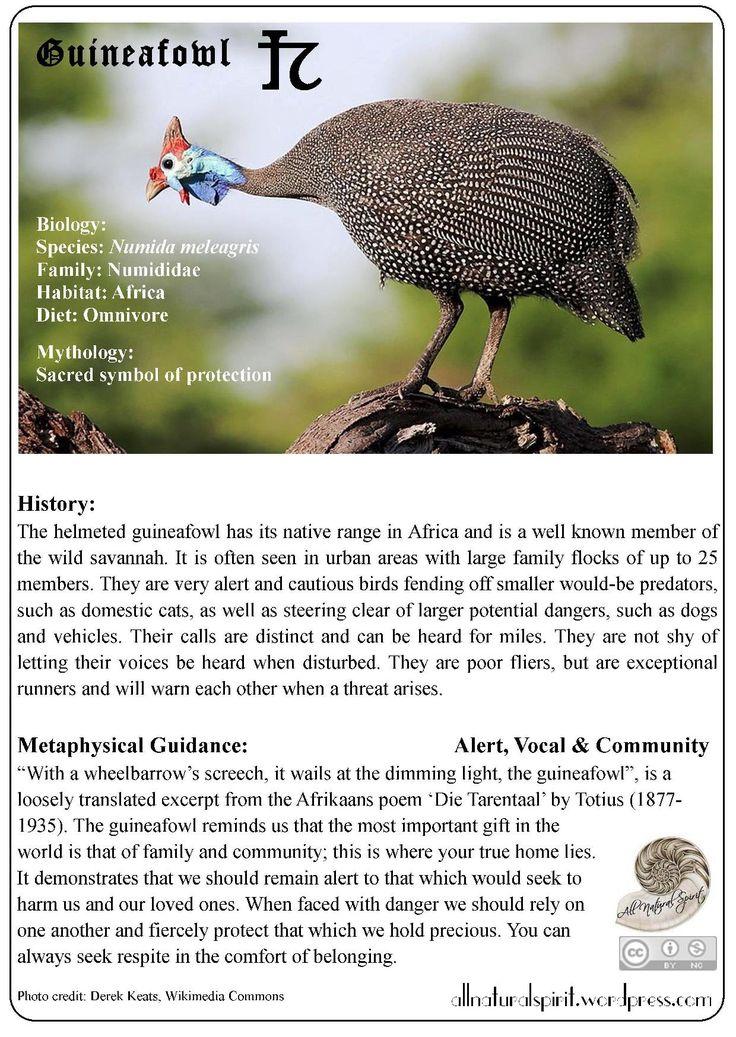Spirit Animal Lore 2#: Guineafowl - Free Oracle Card