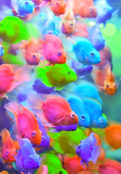 The 8 Best Images About Fish On Pinterest Glow Tropical