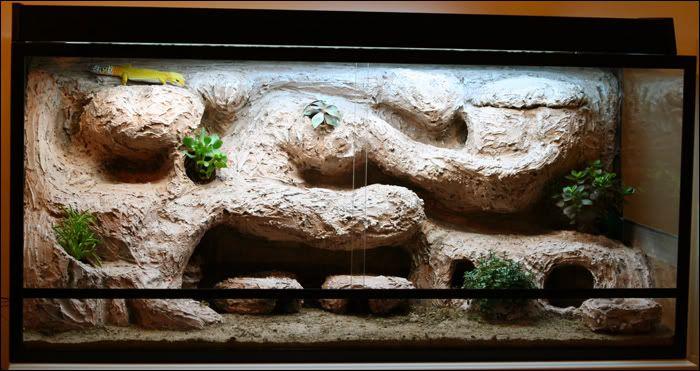 Leopard Geckos: the ultimate naturalistic vivarium complete with leos - Geckos Unlimited