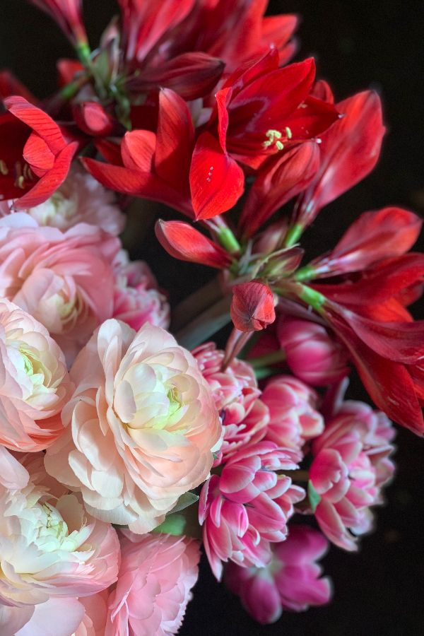 Amaryllis Ranunculus And Tulips Are All Cool Season Flowers And