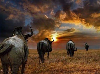 incredible africa photos 4