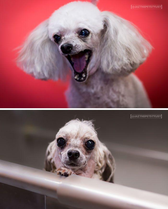 Antes Y Despues De Perritos Al Ser Banados Perros Mojados Humor Divertido Sobre Animales Mascotas Tiernas