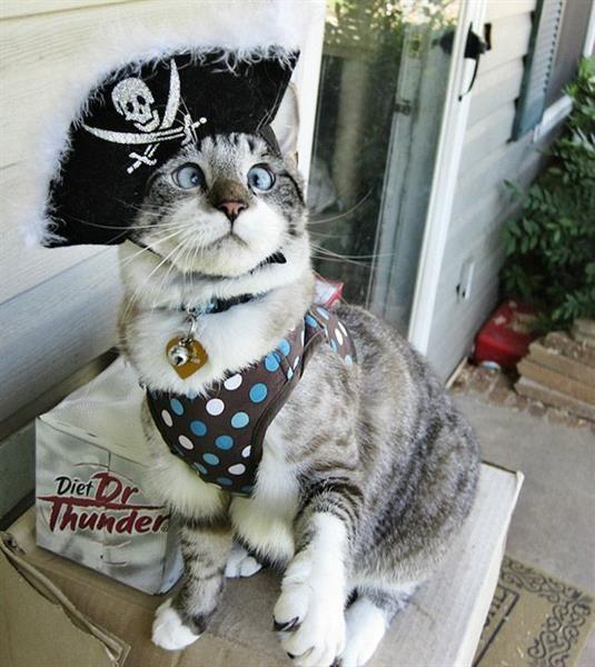 Кошачьи костюмы для конкурса