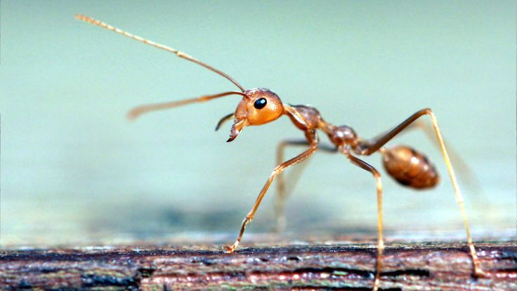 Fire ant control: One scientist evaluates ways of getting these annoying and painful bugs out of your life.
