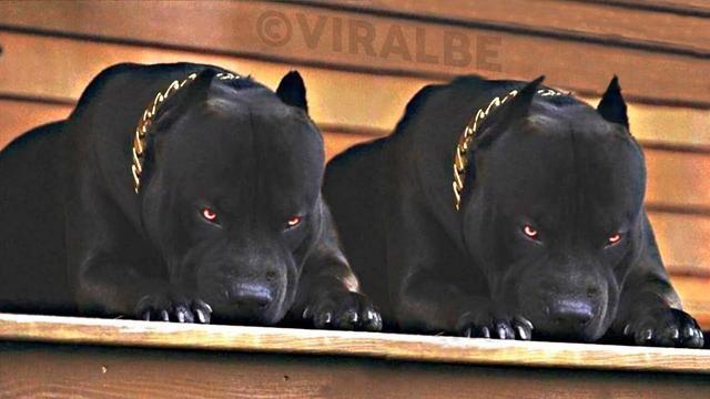 Ultimate Smartest Best Trained Dogs Big Dog Breeds Smartest