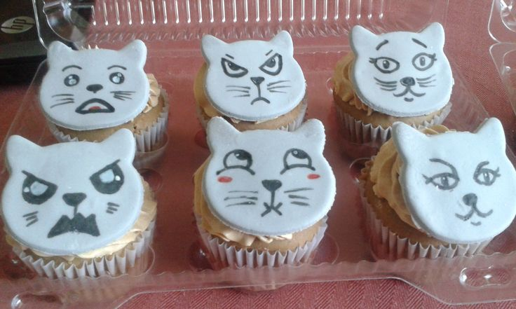 caritas de gatito