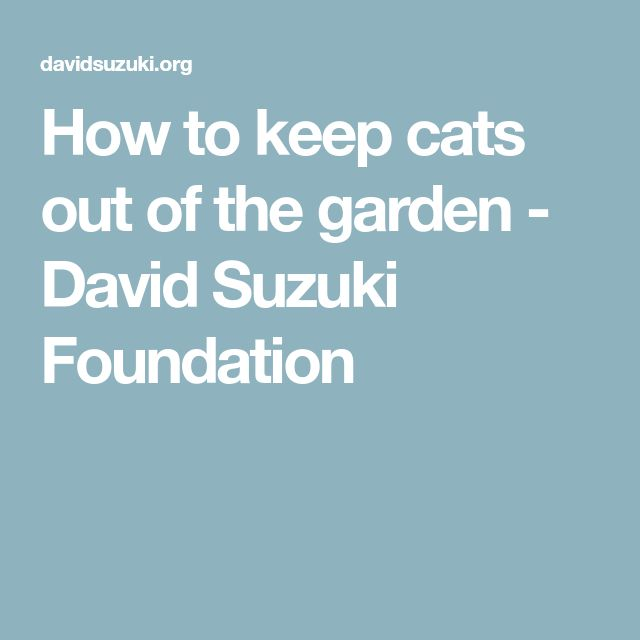 How to keep cats out of the garden - David Suzuki Foundation