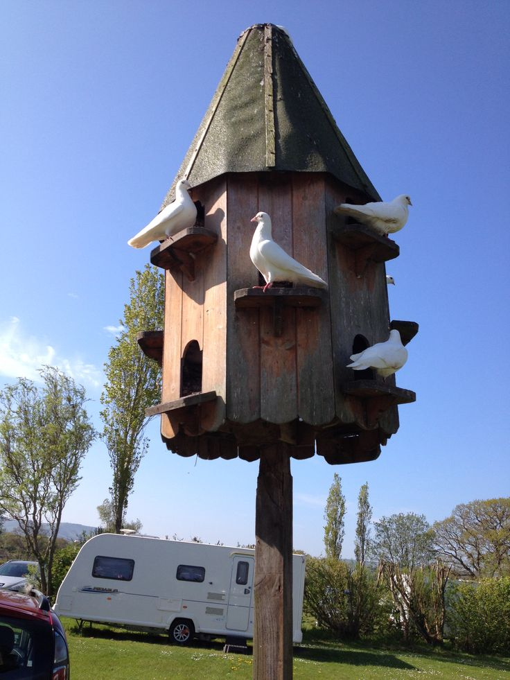 lovely birdhouse for doves #9: Dove Cote Eastbourne