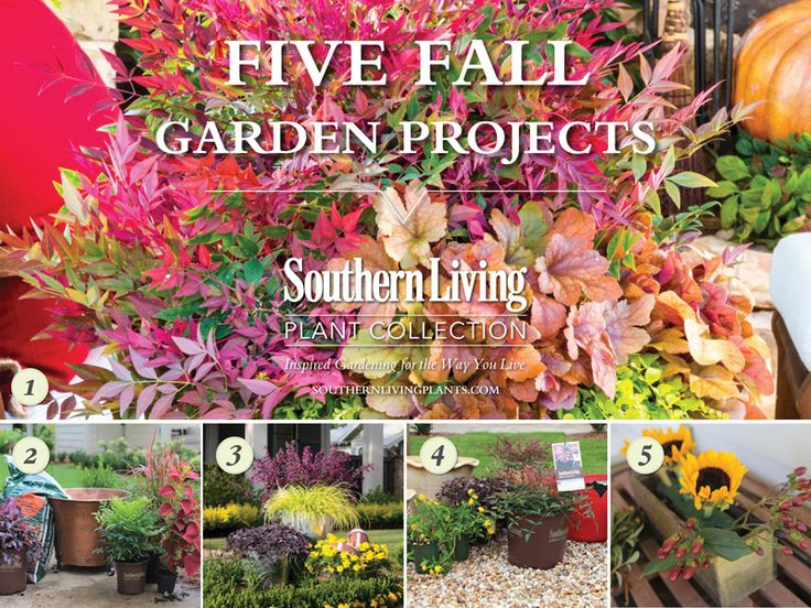 25 Best Ideas About Fall Planting Guide On Pinterest Fall Flower Gardens Bulb Flowers And