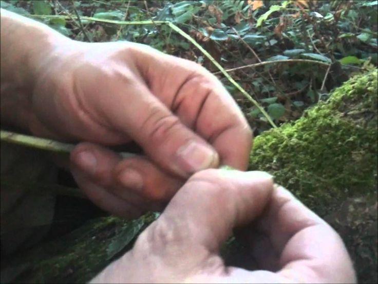 Buhscraft fabrication d'une corde en ronce, le lacet de survie