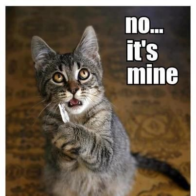 Funny animals with funny sayings for kids