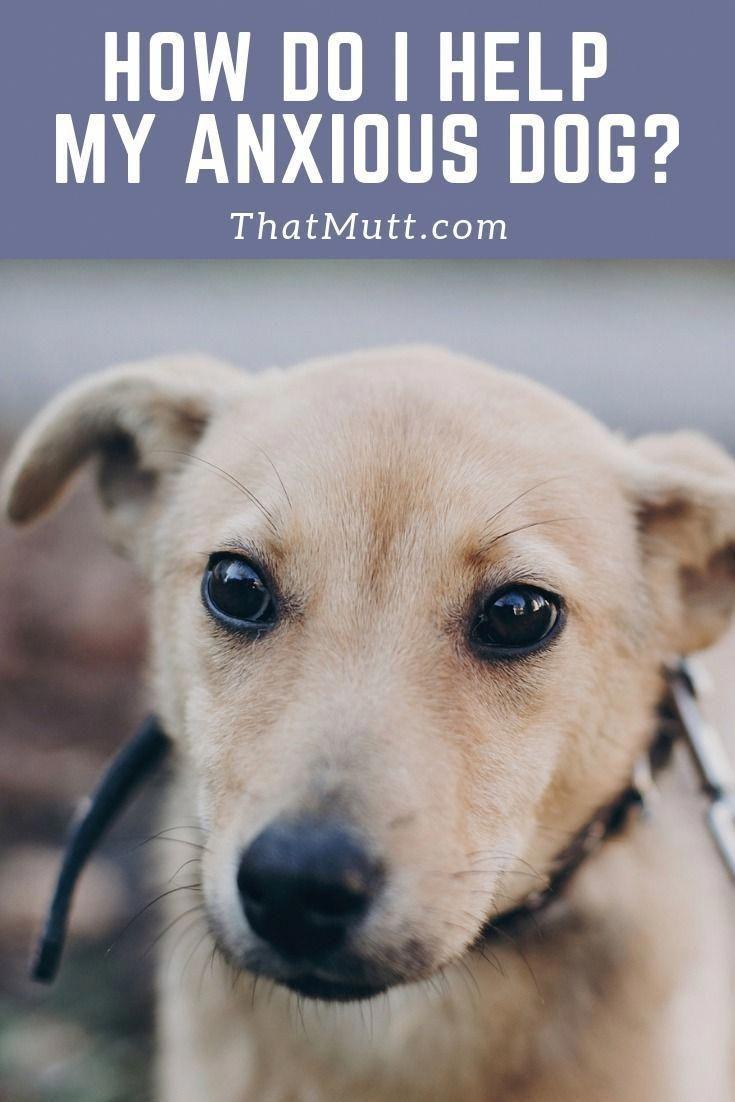 Pin On Tips On Dog Training