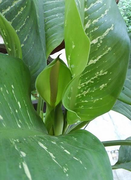 10 Super Easy to Grow Indoor House Plants - Garden Mandy blog